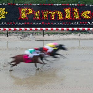 Preakness Stakes Predictions Odds Picks Favorites Horse Racing Betting Best Bets Long Shots